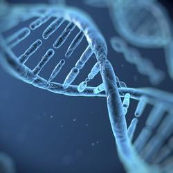 Исследования израильских медиков: иммунная система развивается на ранних сроках беременности
