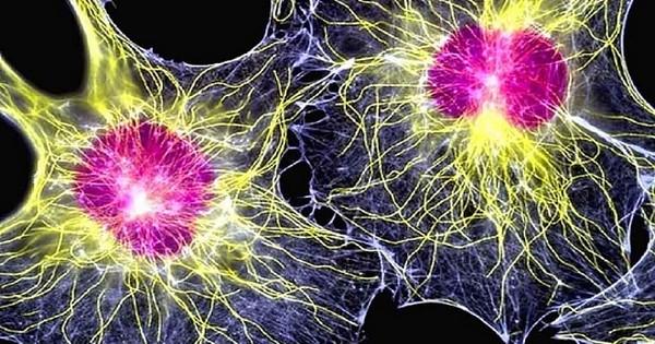 Раннее выявление рака поджелудочной железы: исследования и надежды