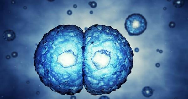 «Плодотворное» исследование: прорыв в области искусственного оплодотворения