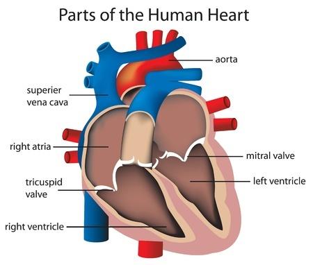Хирургия сердечных клапанов